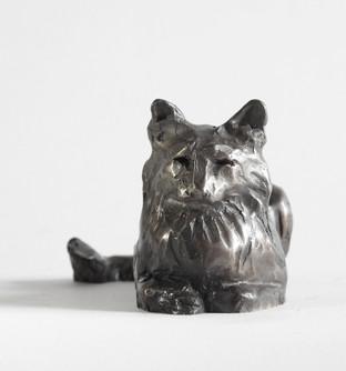 Feline Fancy, AKA Mr.B