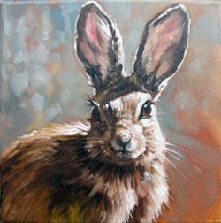 Nutall's Cottontail