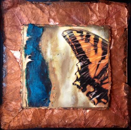 Butterfly Copper