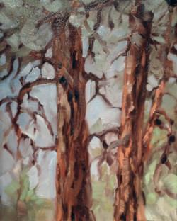 Pondo Pines