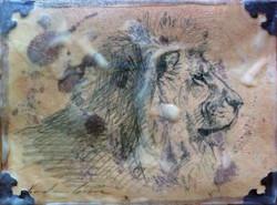 Lion Study (SOLD)