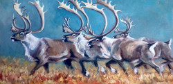 Three Kings, Caribou (SOLD)
