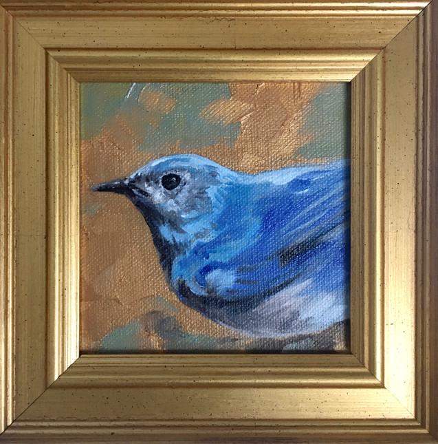 Golden Creatures: Mountain Bluebird
