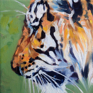 Tiger Profile (SOLD) Prints Available