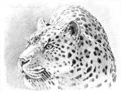 Leopard Drawing (SOLD)