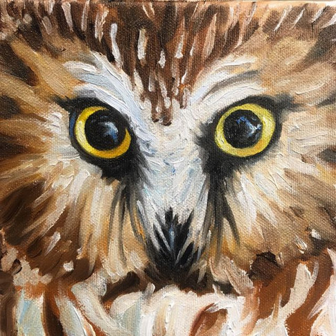 "Yellow Eyes, Northern Sawhet / Oil on Canvas / 6"" x 6"" / $240"