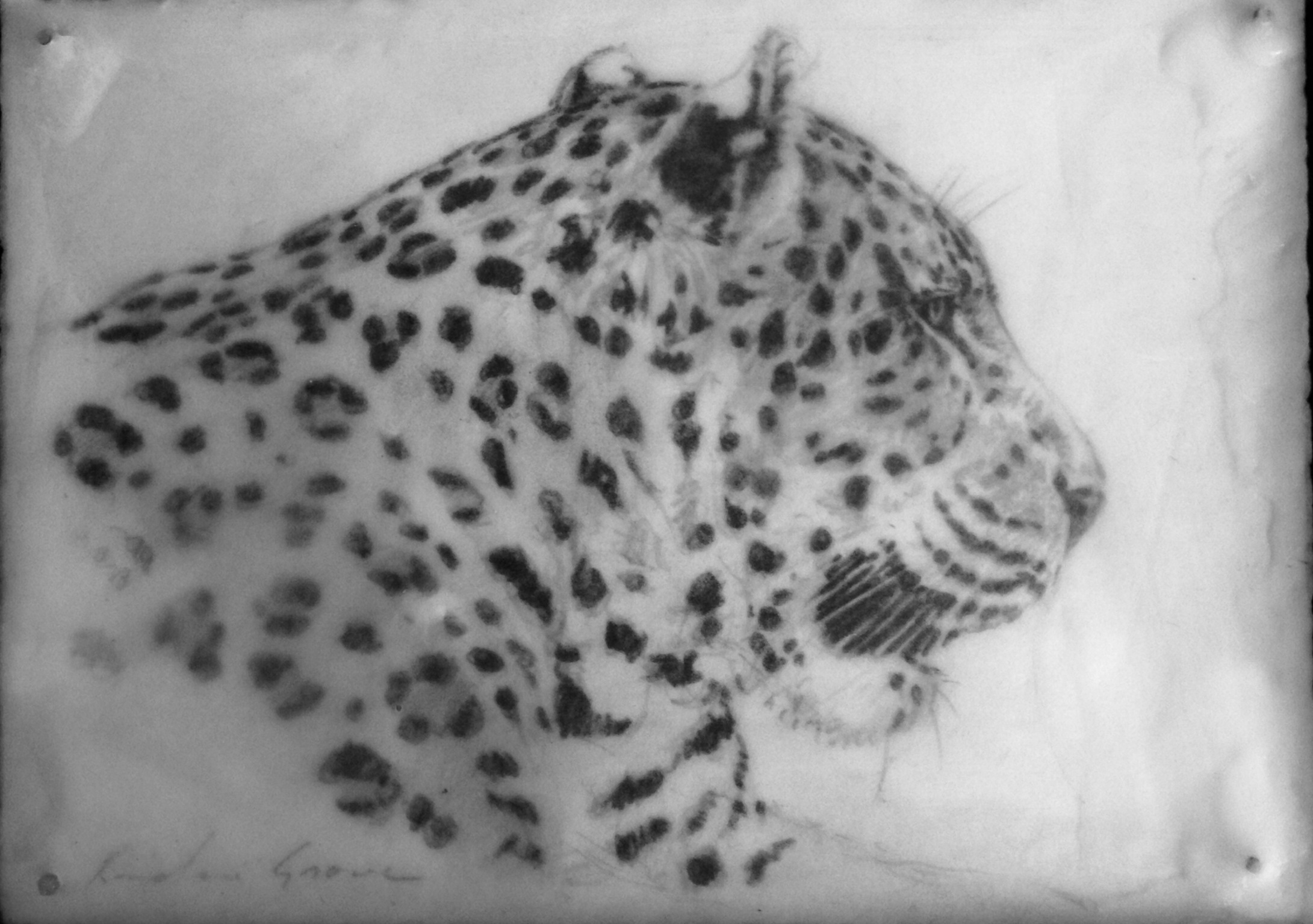 Leopard Profile (SOLD)