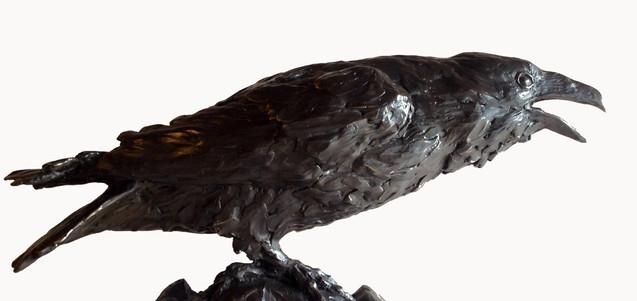 Ravens Voice