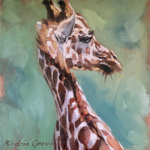 Young Sun Lit Giraffe (SOLD) Prints Available