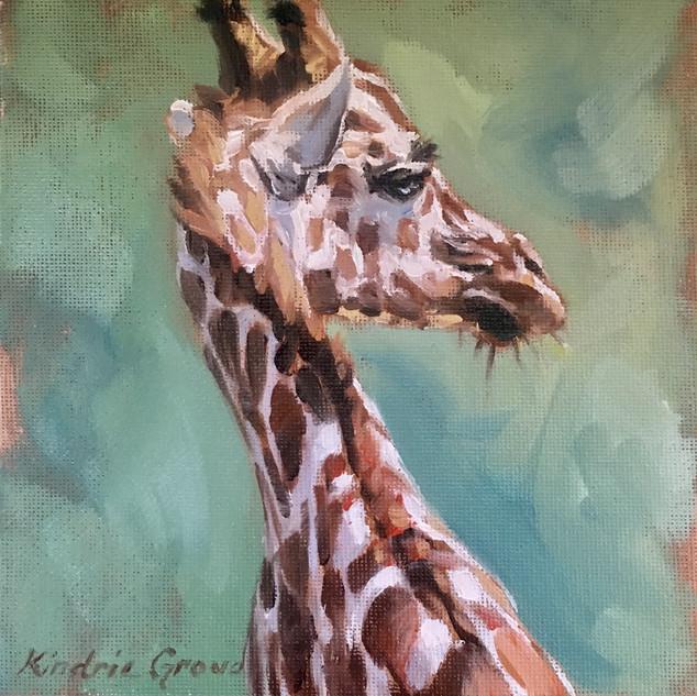 Young Sun Lit Giraffe (SOLD)