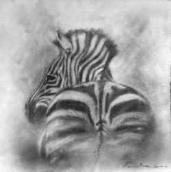 Zebra Rump (SOLD)