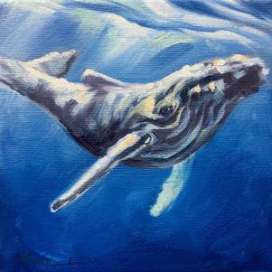 Celebration: Humback Whale