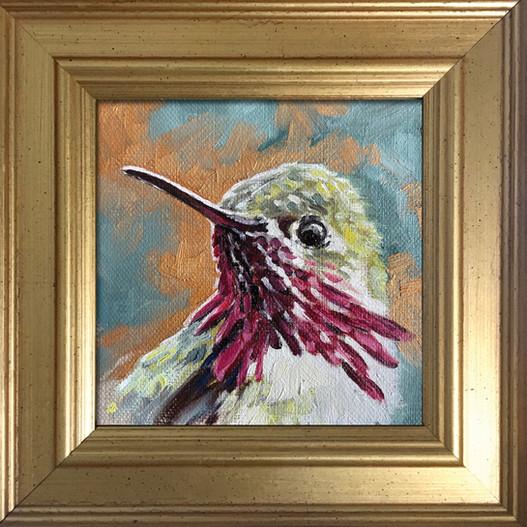 Golden Creatures: Male Calliope Hummingbird