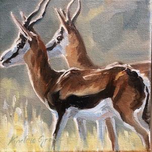 Springbok (SOLD) Prints Available