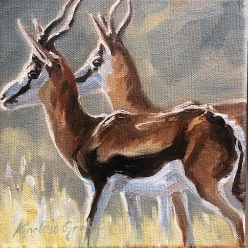 "Springbok / Oil on Canvas / 6"" x 6"" / SOLD"