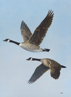 """Canada Geese / Giclee / 18"""" x 24"""" / 28"""