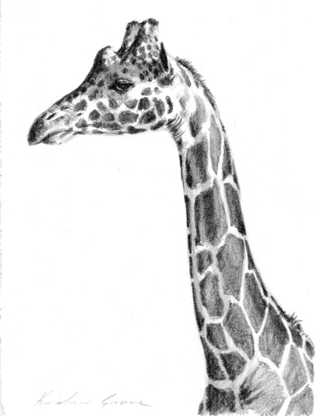 Giraffe Profile (SOLD)