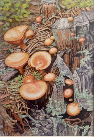 """Mushrooms / Watercolour / 7"""" x 10"""" / $195"""