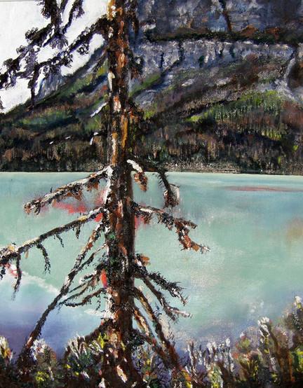 Lake Louise Pine