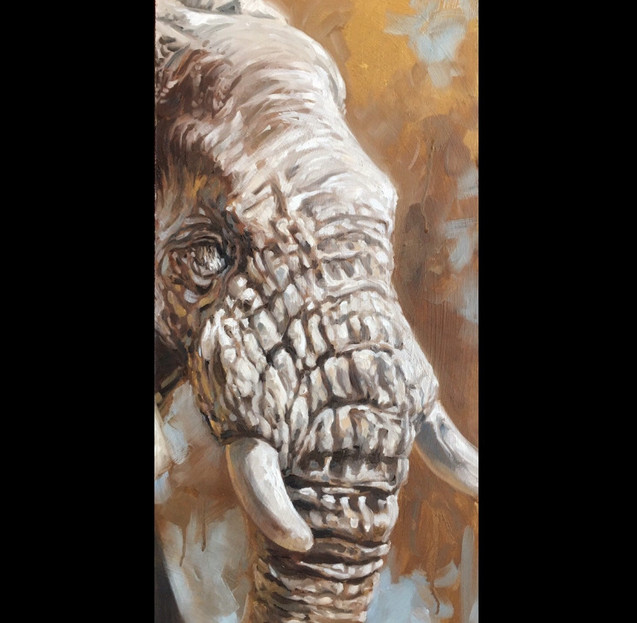 Golden Creatures: Young Elephant