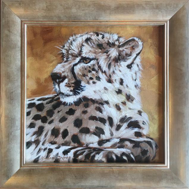 Golden Creatures: Young Cheetah