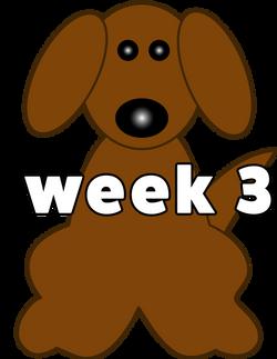 DOG WEB 3