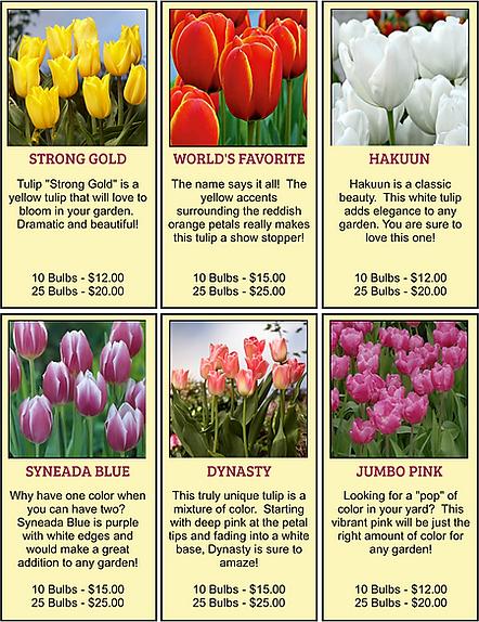 Tulip bulb fundraiser varieties