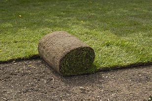 Sod installation by The Tulip Company garden center