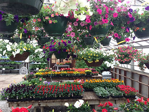 The Tulip Company garden center is fully stocked with blooming hanging baskets, tropicals, and much more!
