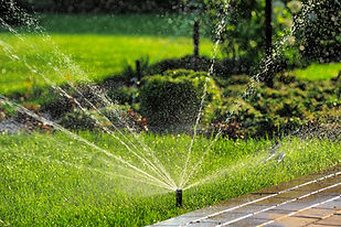 Irrigation install by The Tulip Company garden center