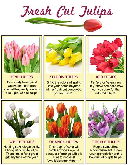 Fresh cut tulip fundraiser varieties