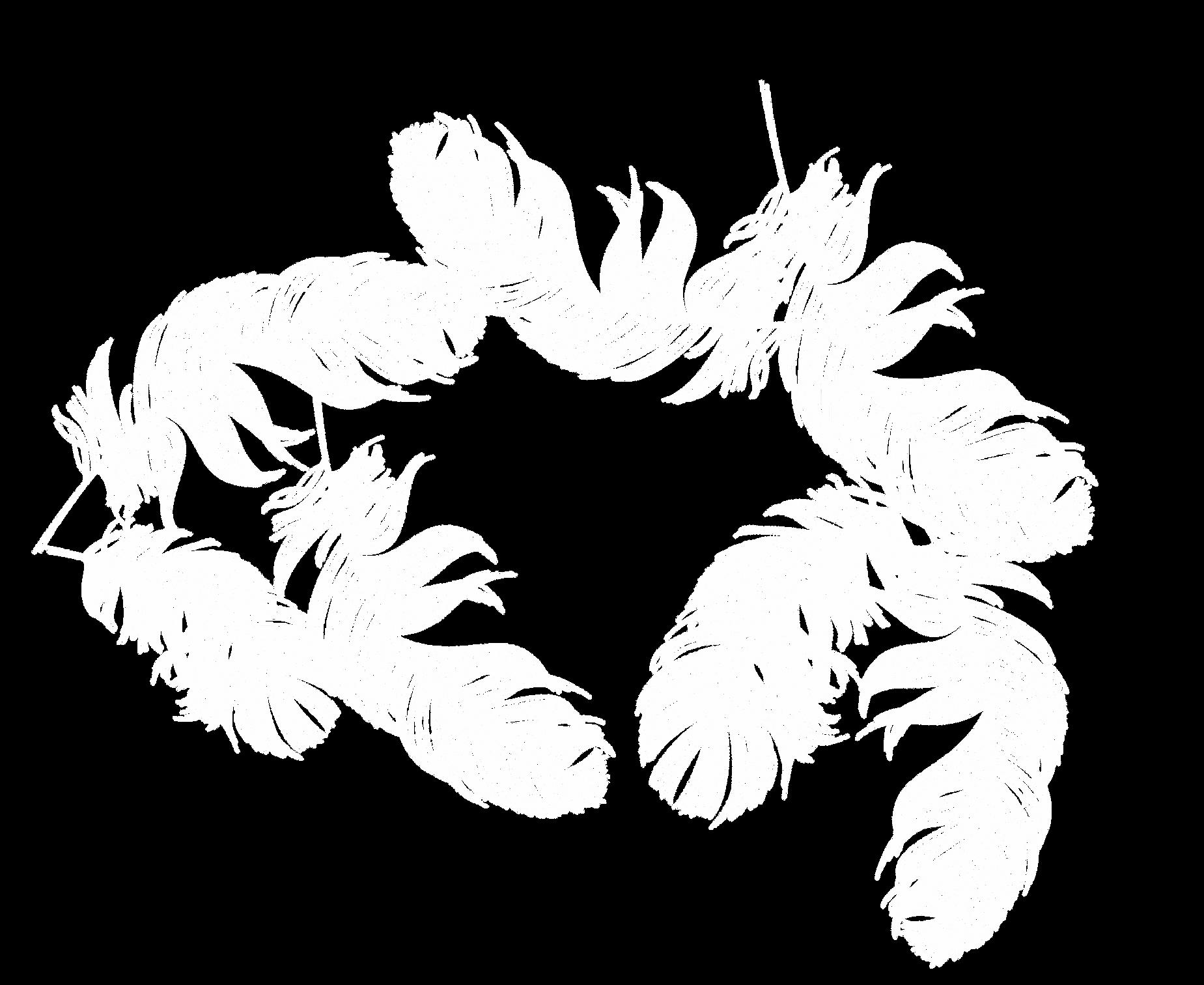 白羽.png