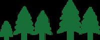 Groupe d'arbres de pin