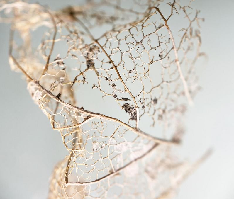"Catalina Aranguren   'Leaf Remains' (2020) Photograph 91.5 x 91.5cm (36 x 36"")"