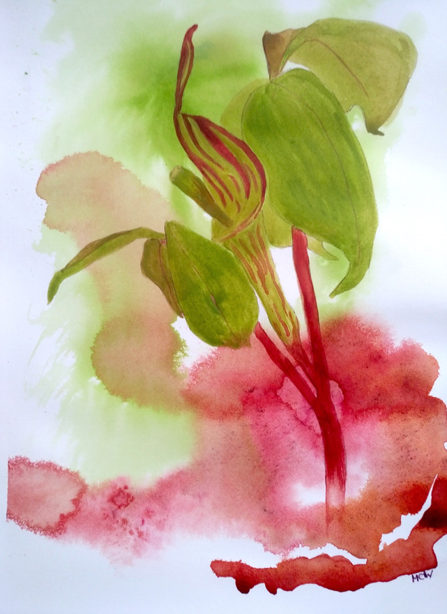 """Mary Waltham  'Jack-in-the-Pulpit' (2020) Watercolor 35 x 25cm (14 x 10"""")"""