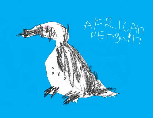 African Penguin.jpg