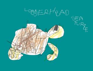 Loggerhead Sea Turtle.jpg