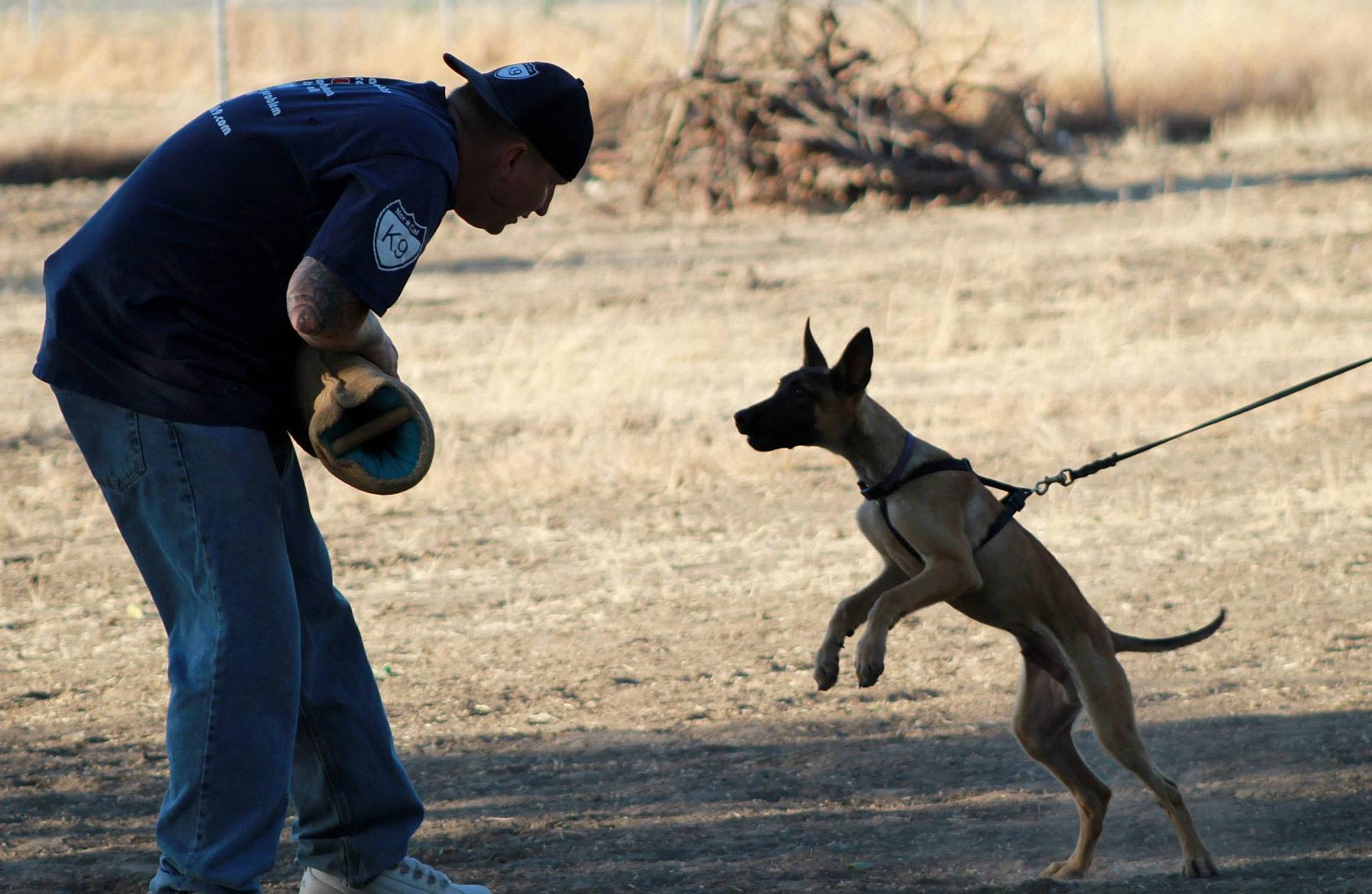 Norcal K Dog Training