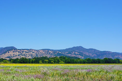 We Drive Napa Valley Scenic Picture