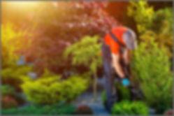 садовник 03.jpg