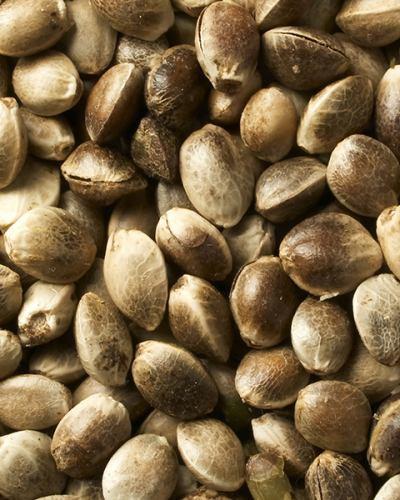 Raw Hemp Seed