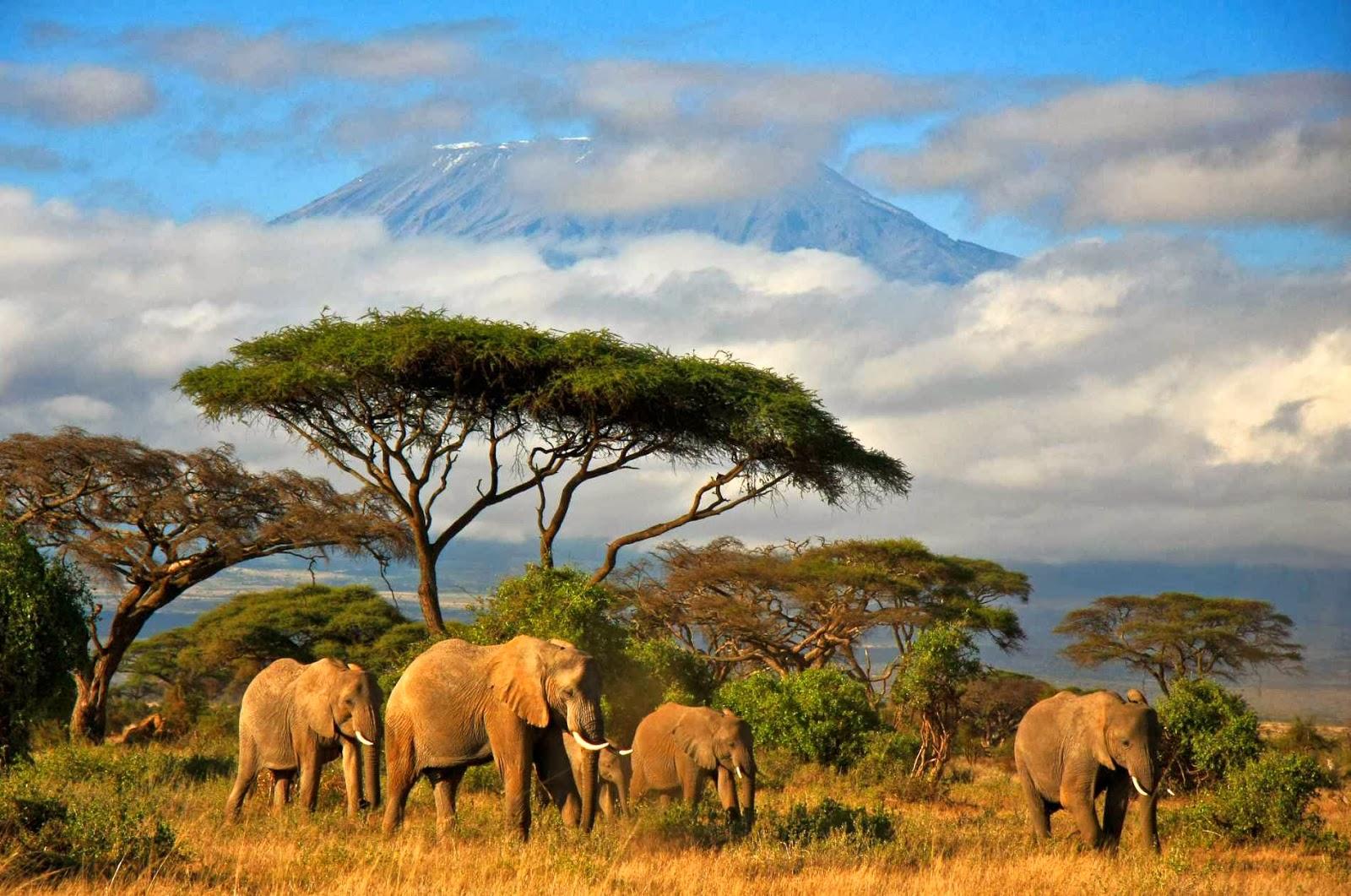 Tanzania Cover Photo