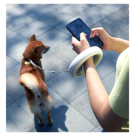 leashwalk.5_ctnql7t.jpg