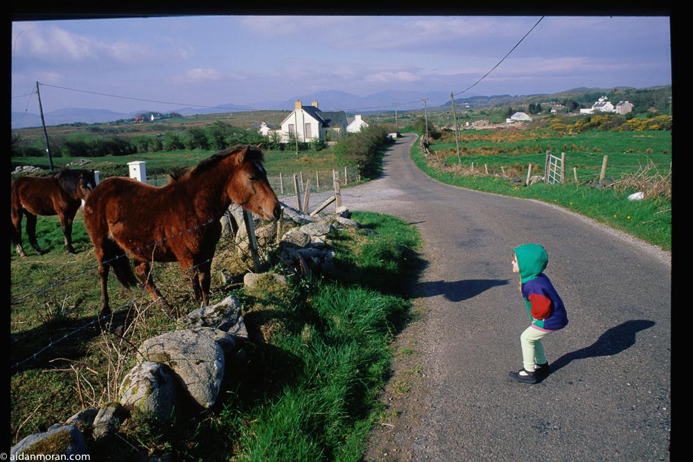 F_Horse