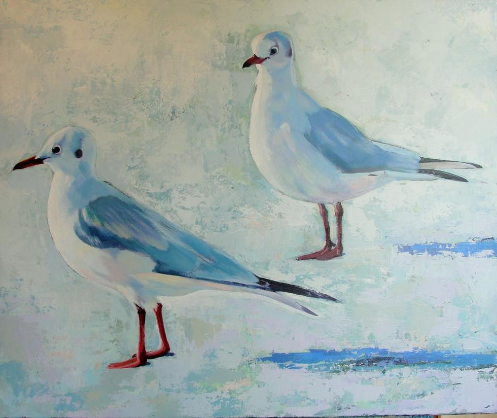 Black head gulls