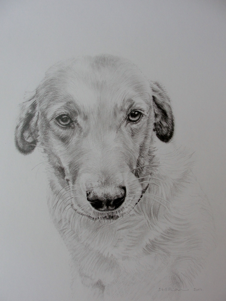 Commission pencil sketch A4