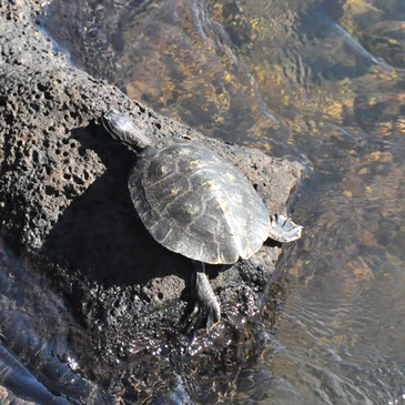Turtle Watch!