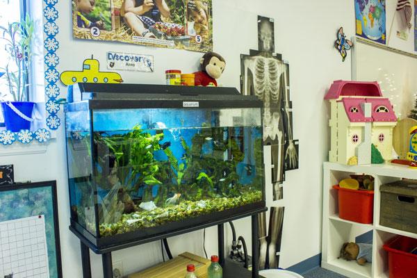 PreK Fish Tank