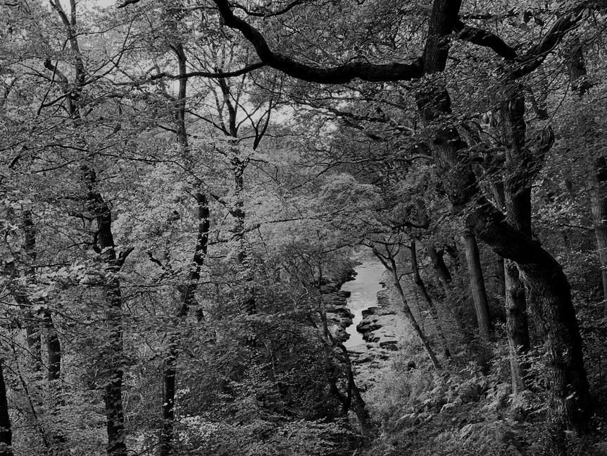 Medd Forest1.jpg