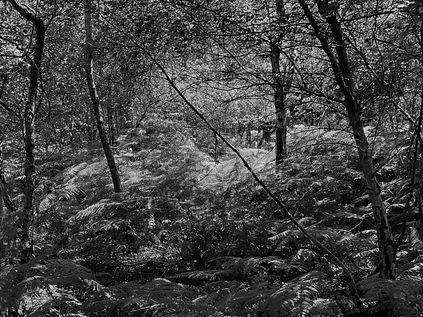 Medd Forest 5.jpg